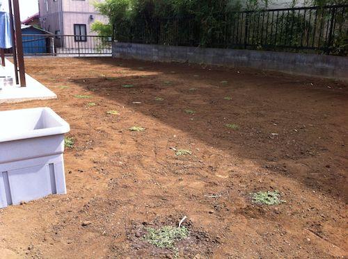 庭にクラピアを植え終わる