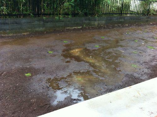 雨が降り出したときの庭