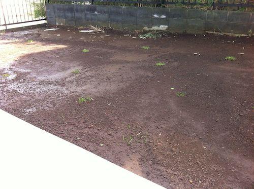 水が退いた後の庭