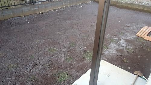 庭の霜柱とクラピア02