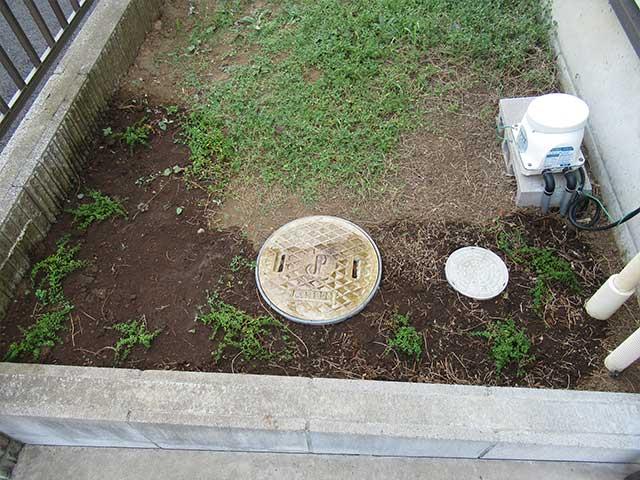 ロンギカウリスを庭に植えて水をあげる